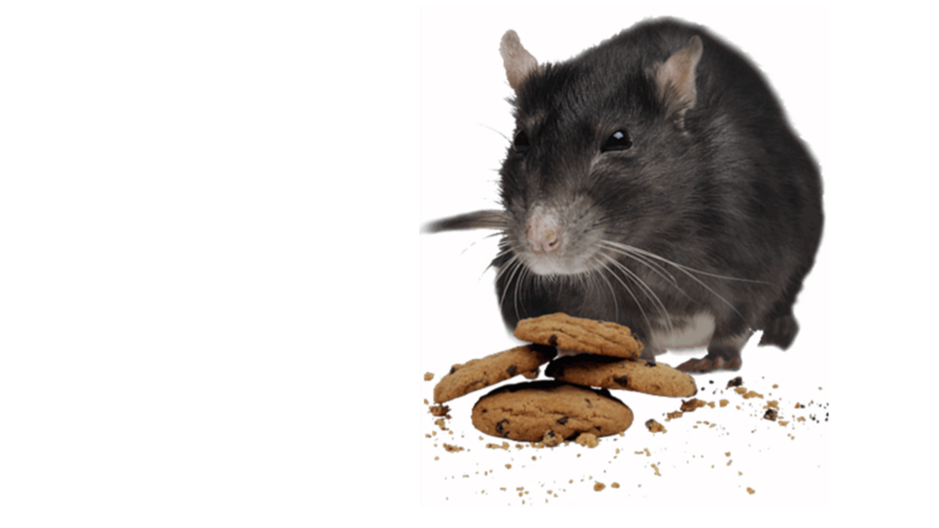 Mouse and cookies